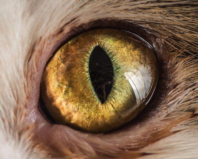 'Les yeux sont le miroir de l'âme, celui qui sait y voir est rarement trompé.' disait le lexicographe et poète français Pierre-Claude-Victor Boiste célèbre