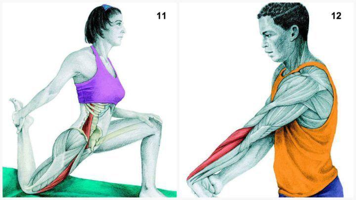 X11 11. Задействованные мышцы: поясничная и квадрицепс  Выполнение: встаньте на колено, медленно подайте правое бедро вперед. Возьмитесь за стопу сзади и напрягите ягодичную мышцу.  12. Задействованные мышцы: разгибатель предплечья  Выполнение: плечо опустите вниз и отведите назад, затем зафиксируйте его в оптимальном положении. Теперь начинайте надавливать на противоположную руку, как показано на рисунке.