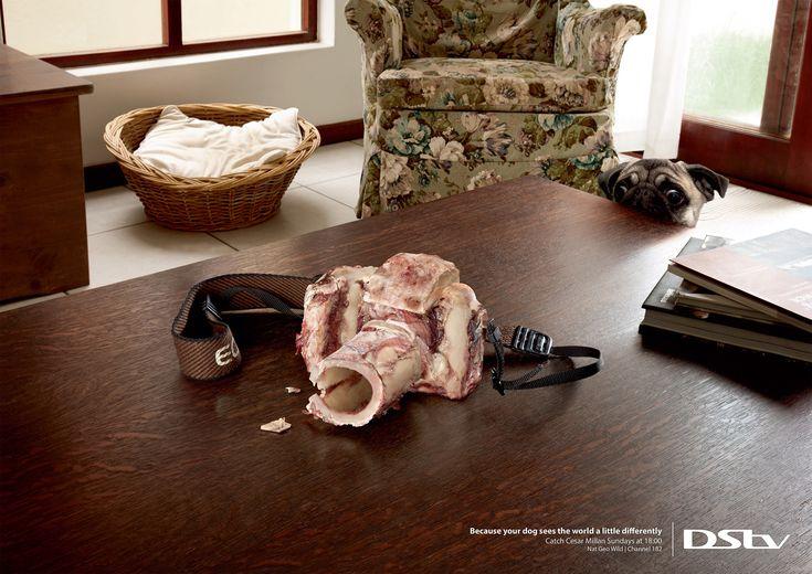 """世界をちょっとだけ違う視点でみているから。肉でできたカメラとペットの視線が描くものとは?南アフリカのヨハネスブルグで実施されたシリーズプリント広告。 DStvというテレビ局が、動物に関するテレビ番組の告知の為に制作しました。消費者の一番近くにいるであろう動物(=ペット)にフォーカスしたビジュアルがこちら。  ペットとは、あなたのまわりのものを見境なく噛んだりなめたりしてしまうもの。""""そういったことが何故起きるのか""""を説明したようなビジュアル。動物からみれば、得体の知れないバッグやカメラや靴は、こんな風に見えているかもというペット目線での世界の見え方を表現。  """"Because your dog sees the world a little differently. Catch Cesar Millan Sundays at 18:00. Nat Geo Wild   Channel 182."""" あなたのワンちゃんは、世界をちょっと違った視点で見ています。Catch Cesar Millan Sundays、18時から。182チャンネルのNat Geo Wildで。"""