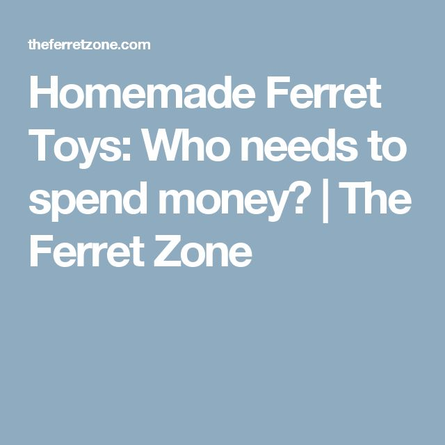 Homemade Ferret Toys: Who needs to spend money? | The Ferret Zone