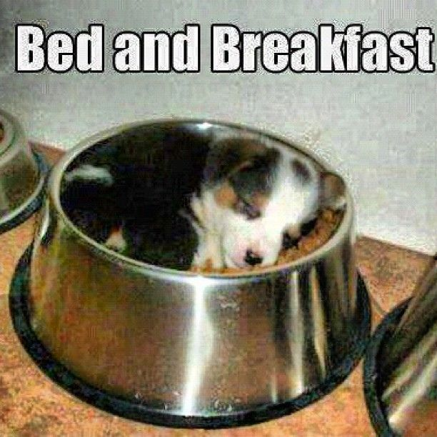Can You Make It Through This Post Without Squealing? from Buzz Feed - an entire post full of the cutest pics (kittens, puppies, babies, other baby animals, adorableness overload!) #FunnyDogs