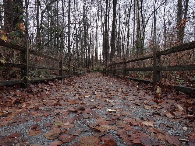 December Trails / Port Coquitlam by Geoffery Kehrig, via Flickr