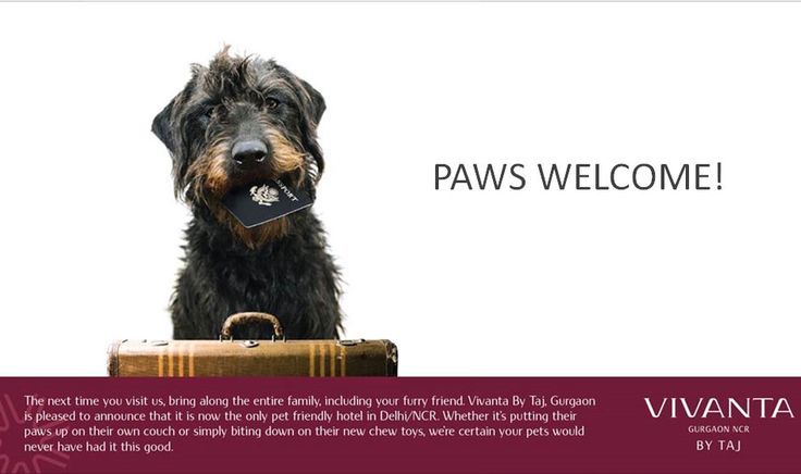 We welcome your furry friends with open arms. #PetFriendly #Pets #Hotels   http://www.vivantabytaj.com/gurgaon