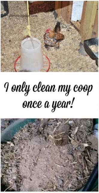 I only clean my chicken coop once a year using the deep litter method. #chickencoop #deeplitter