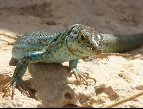 Gecko hautnah in der Höhle ♡