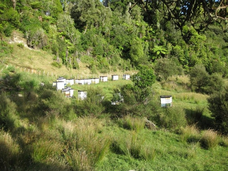 Sweetree Honey Marokopa Apiary