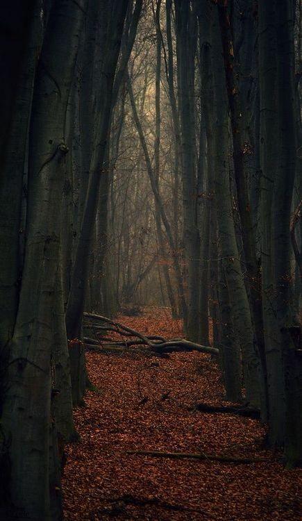 Spooky Fall Wallpaper Пин от пользователя Dawnelle Dione на доске Autumn