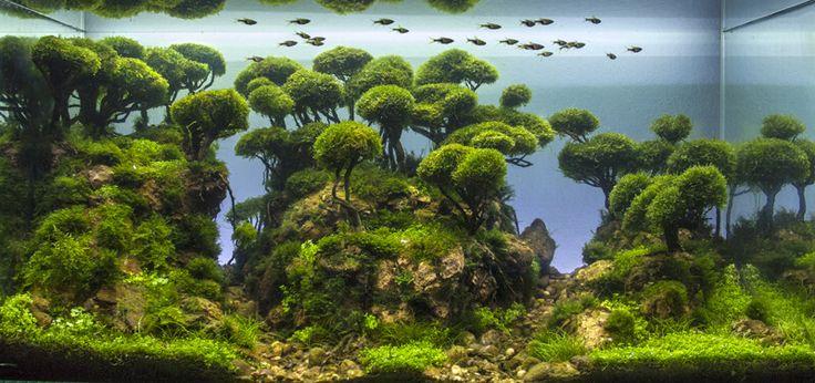 foto acuario Bernat Hosta