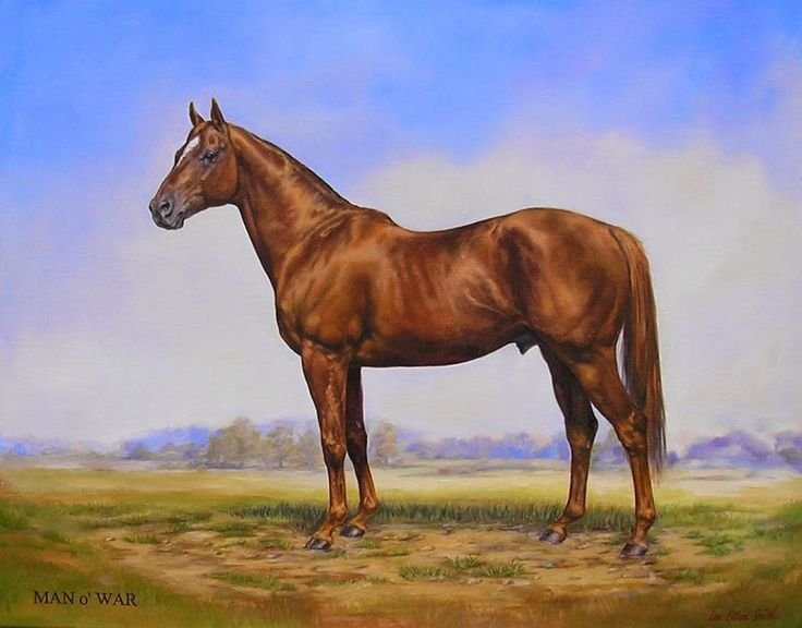 MAN O' WAR: THE MOST FAMOUS HORSE TO NEVER RUN IN THE KENTUCKY DERBY!