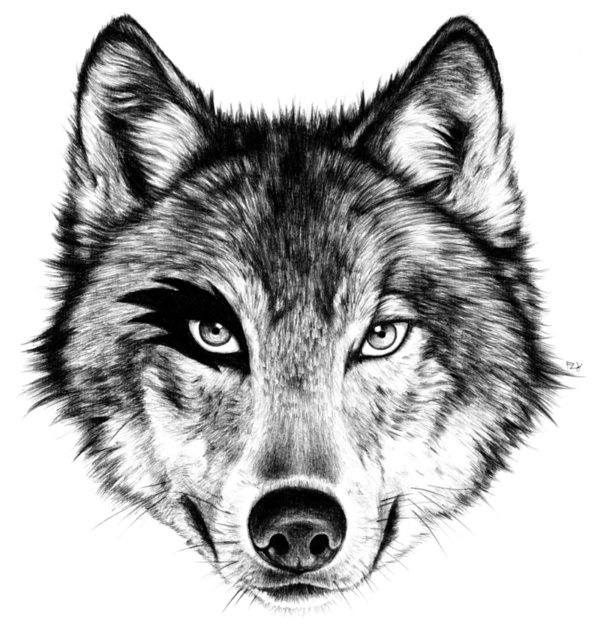 Wolf Drawings Online: Pin By Sarah Sestren On Graphic Design