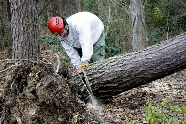 How much does tree removal cost? | Angies List