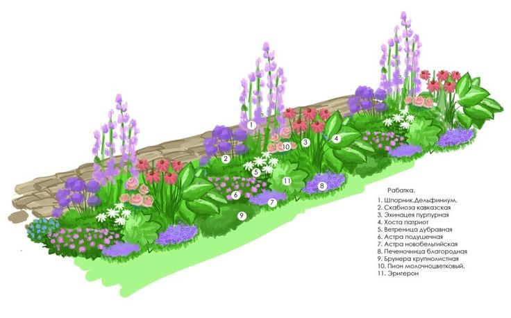 Схема посадки цветочного оформления - рабатки
