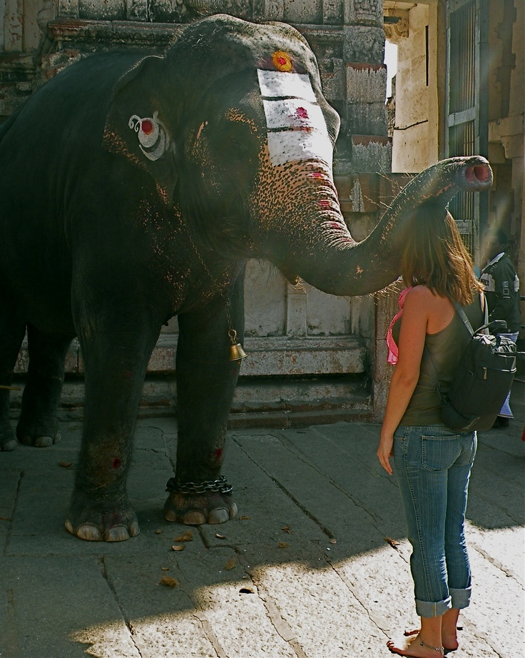 Being Blessed by the elephant in Hampi India,  Photo by Désirée Marie Townley