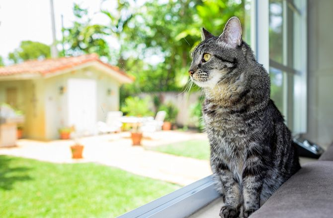 Leaving Your Cat Alone: 9 Things You Need to Know