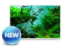 FIRE aquariums is a leading manufacture in opti-clear aquariums, large aquarium and aquarium lightings and accessories. The company boasts a professional, integrity and trustworthy business philosophy to provide world-class aquarium products with services.