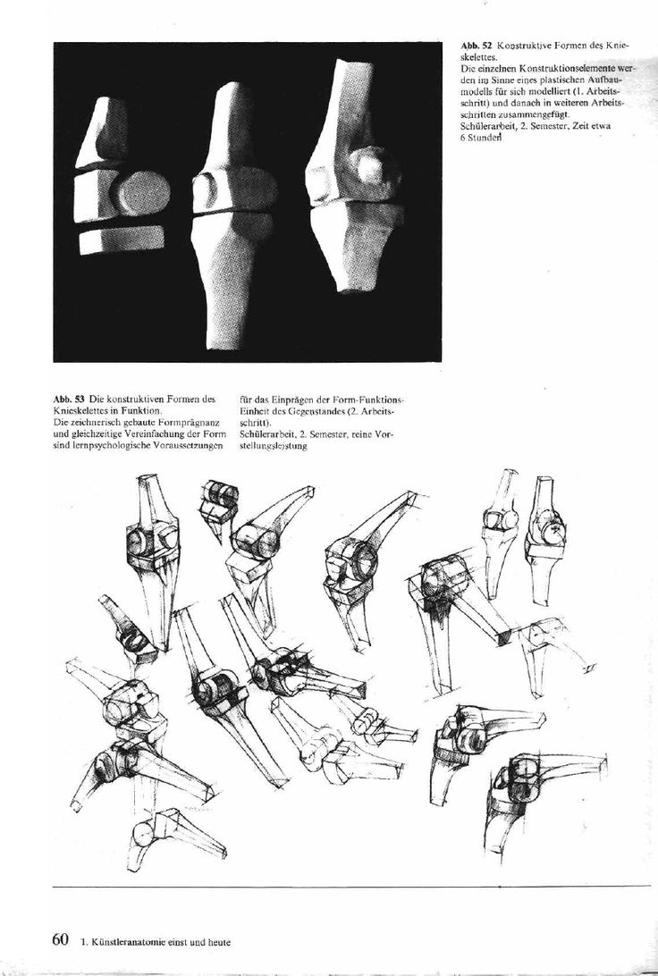 83 best Gottfried Bammes images on Pinterest | Anatomy reference ...