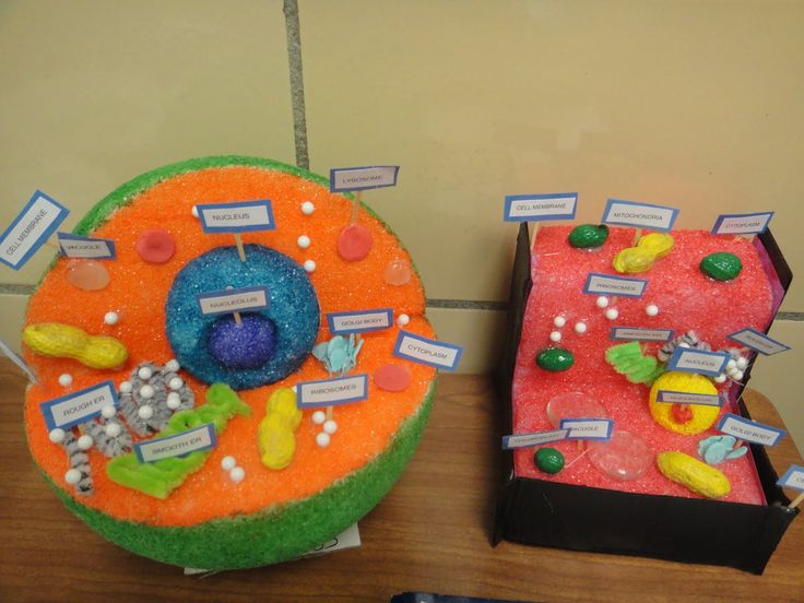 KaTiE's KLaSsrOoM: Cell Functions Project (5th grade ...