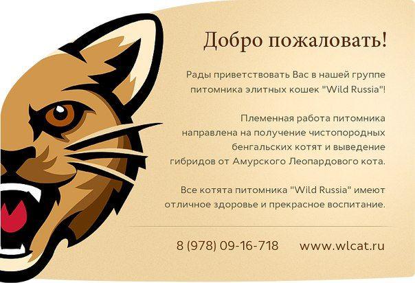 БЕНГАЛЬСКИЕ кошки, коты, котята / бенгал Крым