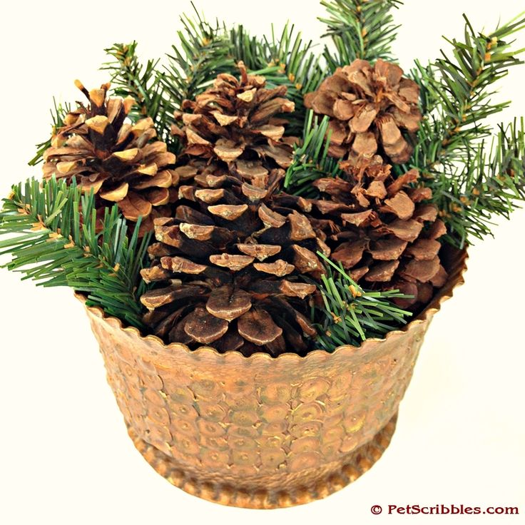 Pinterest the world s catalog of ideas Homemade christmas decorations using pine cones