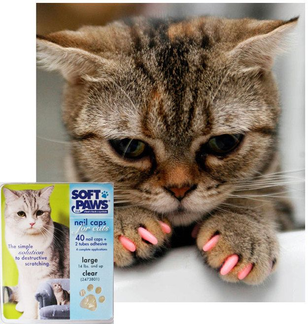 ¡No le cortes las uñas a tus gatos! Si tu gato pierde sangre habitualmente, cubre sus pezuñas con una cobertura de vinilo marca Soft Paws para sus patas:   26 trucos que harán más fácil la vida de cualquier dueño de un gato