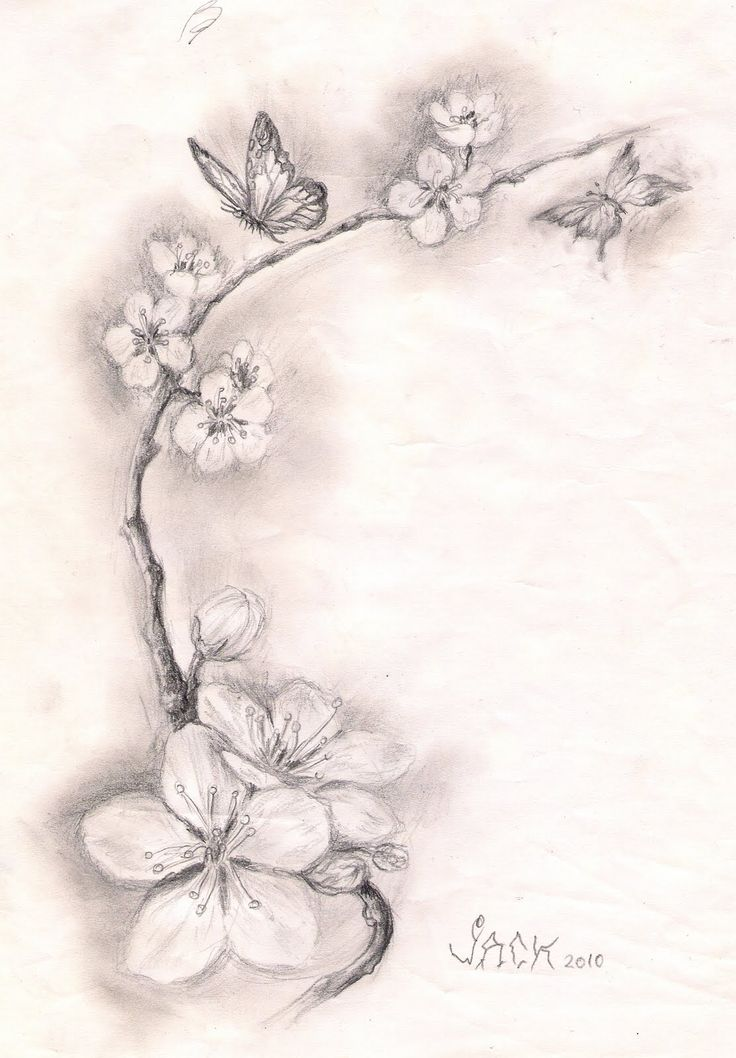 Dracones Tattoo Studio Sketch Cherry Blossoms