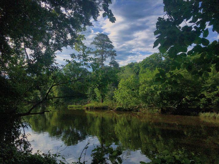 White Pines Nature Preserve Deep River North Carolina USA [OC][4032x3022]