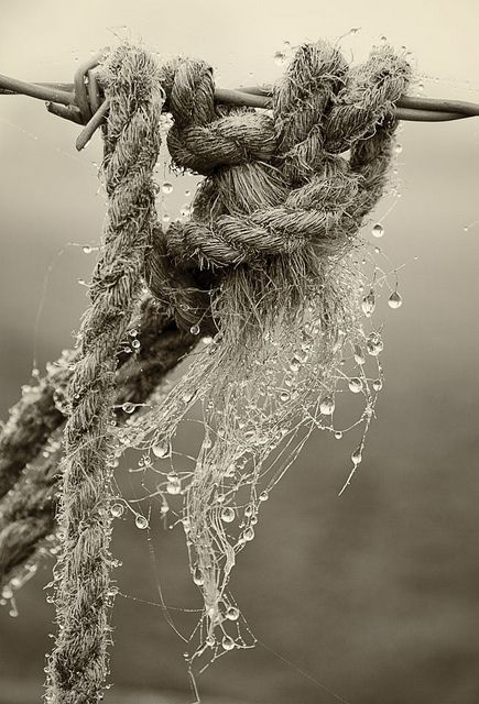 araknesharem:  Old Rope and Wire by dave in norfolk on Flickr.