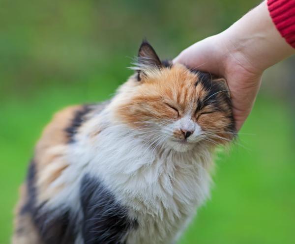 Tem onça-pintada em casa? As melhores dicas para acalmar a fera!  #pets #gatos #adestrar #adestramento #animais
