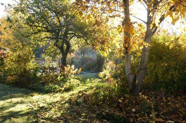 Storchschnabel und andere Stauden: November 2015