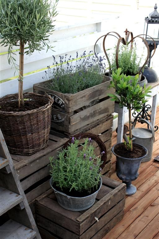 Crates and galvanized pots.: Modern Gardens, Gardens Ideas, Container Gardens, Patio Gardens, Rosemary And Lavender Planters, Herbs Gardens, Small Gardens, Gardens Pots Ideas, Front Porches