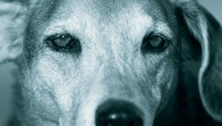 Holistic treatment options for dogs with epilepsy