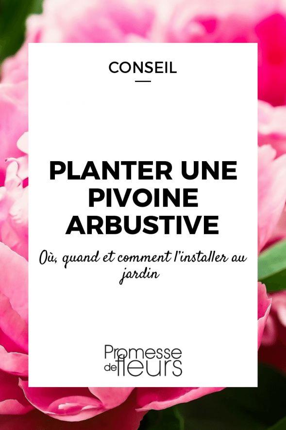 Comment bien planter une pivoine en arbre (Paeonia ...