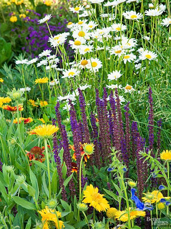 Grow a Living Bouquet mixed border perennial salvia, yellow Gaillardia, black and blue sage, and Shasta daisy