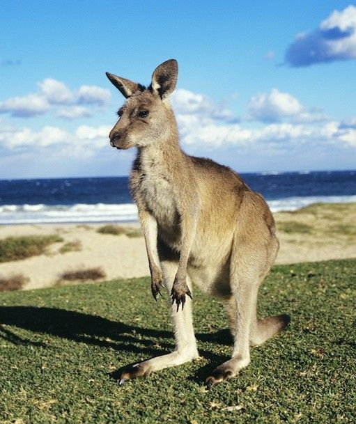 Spotlight On: Australian Animals