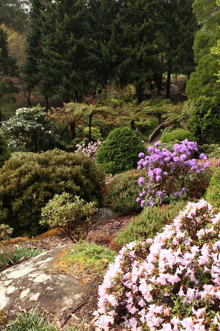 "rockery with rhododendron uniflorum and ""Blue Admiral"""