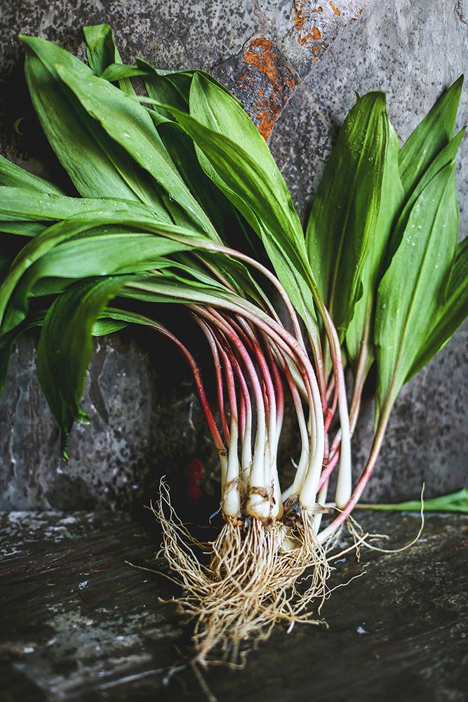 Allium tricoccum (commonly known as ramp, ramps, spring onion, ramson, wild leek, wood leek, and wild garlic) --- photo from circahappy.com