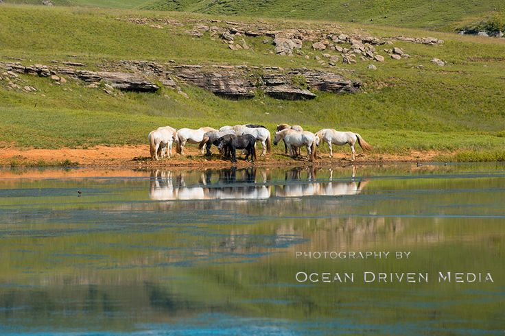 Reflection of horses in lake