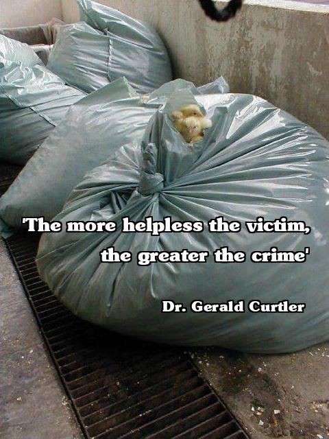 """Each bag is full of waste products. Yep, to the egg industry, LIVE DAY OLD MALE CHICKS are """"waste products."""" Subsequently they are routinely disposed of by the egg industry because they are a useless by-product. Even if you buy free range eggs, YOU are supporting this heartless cruelty."""