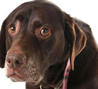 15 Tell-Tale Signs That Your Dog is in Pain Dr. Greg Magnusson, DVM