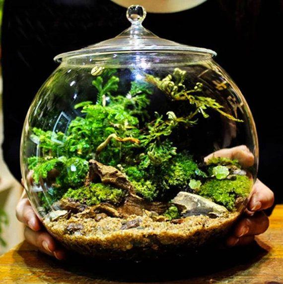 Description de lobjet :  Nom de larticle : Terrarium contenant Bell en pots de verre avec couvercle (grande taille)  Forme : Cloche de forme, fond plat  Taille: 220mm/8,6 (hauteur avec couvercle), 220mm / 8» de diamètre, 115mm / 4.5» diameter(Mouth)  Couleur : Transparent  Résistant aux températures:-20 ° c à 150oC  Utilisation : Meilleure utilisation pour terrarium.  A noter : Les plantes ne sont pas inclus.