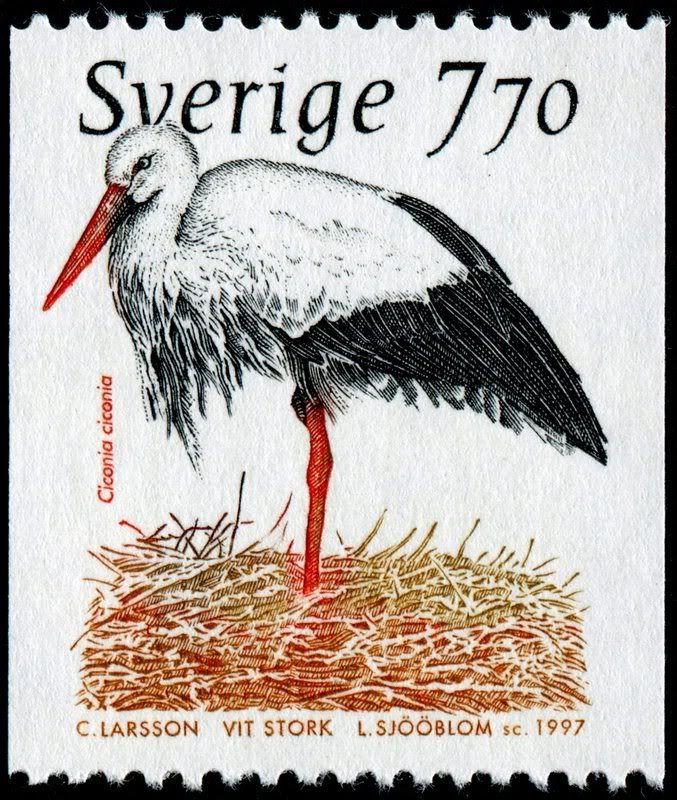 photo SjooblomSweden2209WhiteStork-1-2-97-CLarsson.jpg