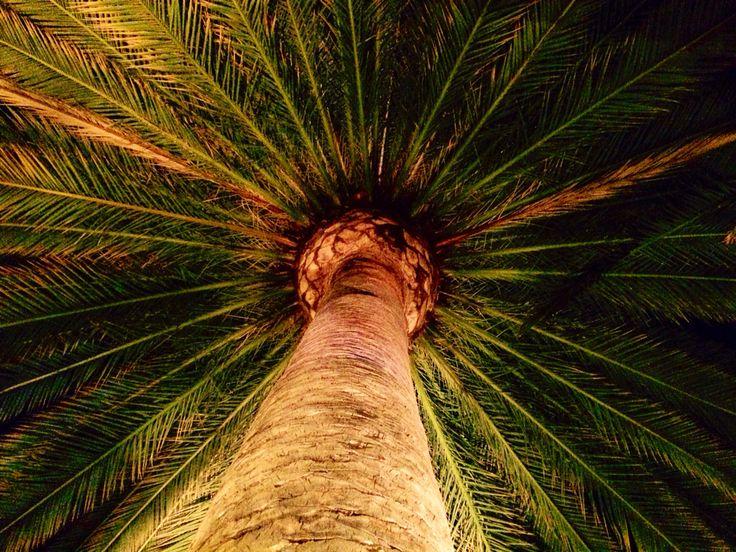 Majestic palm tree at #DowntownDisney!