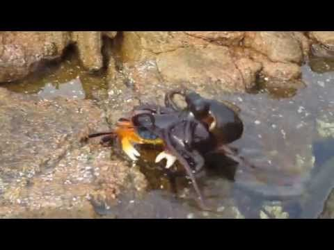 She Was Filming This Crab, But What She Caught On Camera? Terrifying! - LittleThings.com