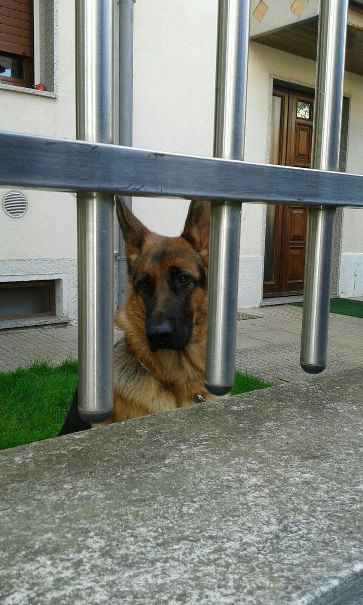 Fujiko in guardia davanti al cancello