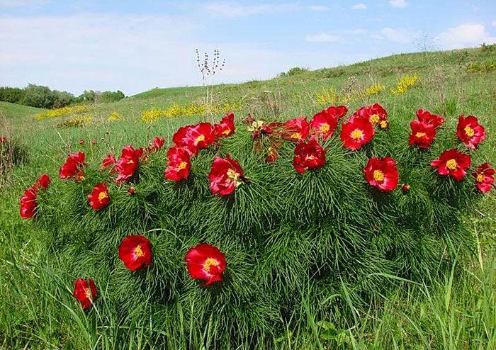 часто пользователи лазоревый цветок фото понедельник