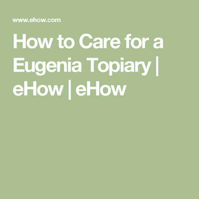How to Care for a Eugenia Topiary | eHow | eHow