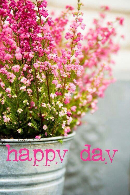 Happy day! Pink Flowers