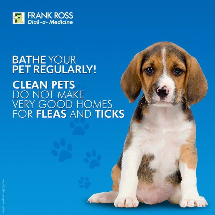 Take care of your Pooch.  #PetCare #PetHealth #FRPet CareTips