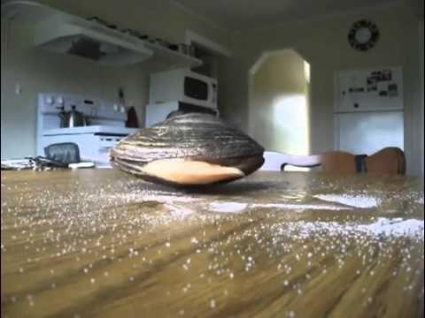 Clam Eating Salt On Table
