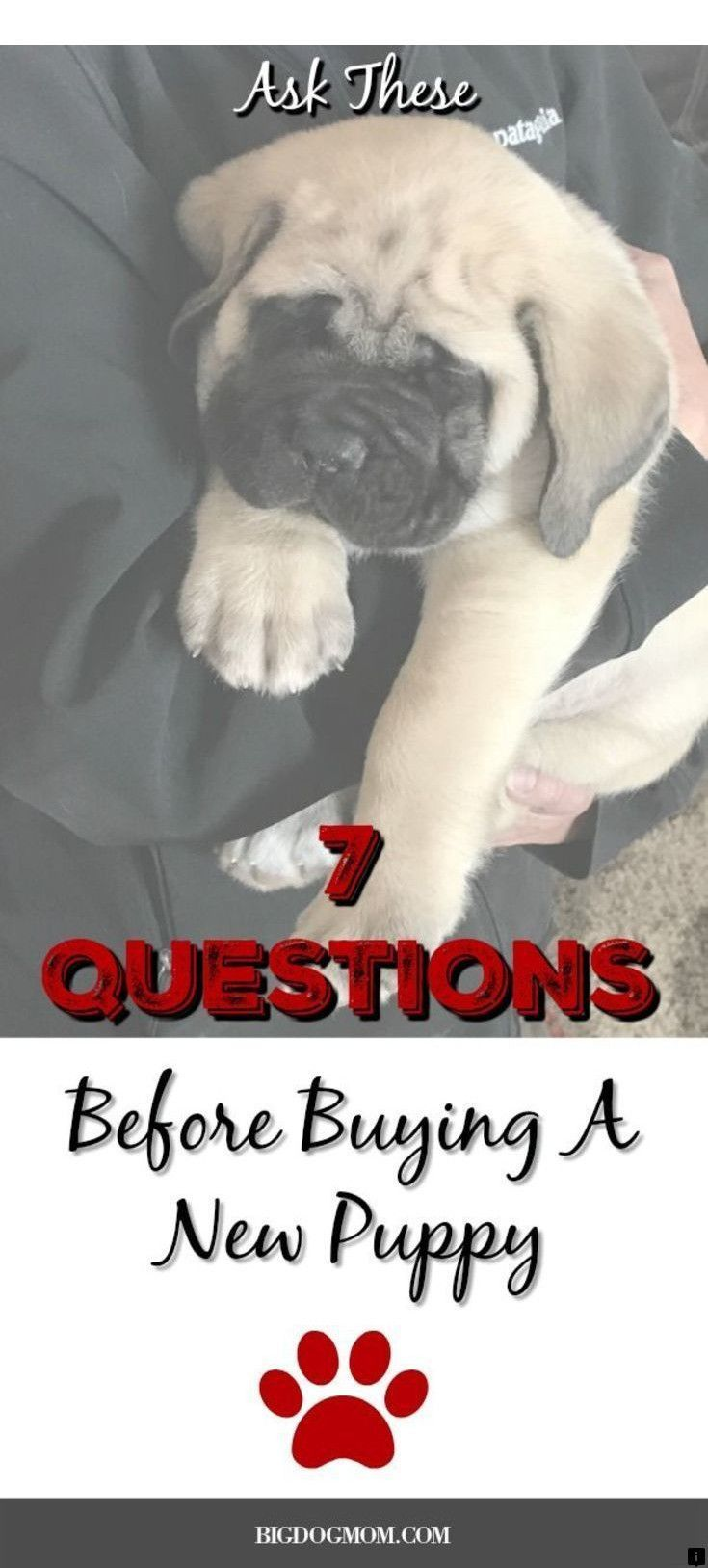 Pin By Pug Puppies On Pugs Pug Puppies For Sale Black Pug